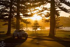 Sunset (Vamsi Illindala) Tags: vamsi illindala vamsiillindalaphotography digirebel canoneos5dmarkiii canon5dmkiii canon olumpusom50mmf14gzuikoautos zuiko olumpus oly manuallens adapter adaptor nature blowhole kiama nsw australia sydney roadtrip sunset dusk sun orange pines tree car shadows rays evening winter fall downunder oz ocean southpacificocean coast