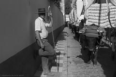 Boyero esperando (ralcains) Tags: andalucia andalousia andalusia españa spain villamanrique blackwhite blancoynegro bw blackandwhite noiretblanc schwarzweis monochrome monochromatic monocromo monocromatico leica leicamonochrom leicam summicron 35mm street streetphotography calle fotografiadecalle rocio romeria ngc telemetrica rangefinder monochrom