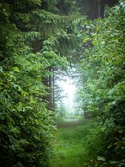 Rund um den Bilstein (janeway1973) Tags: nature natur hessen deutschland germany fog mist foggy dunstig neblig nebel diesig wald forest bäume trees green grün tunnel