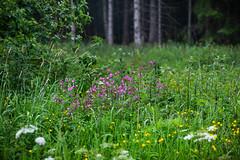 Rund um den Bilstein (janeway1973) Tags: nature natur hessen deutschland germany fog mist foggy dunstig neblig nebel diesig wald forest trees bäume grün green meadow wiese wiesen