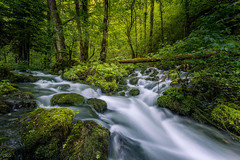 Lush (FotoSeiler) Tags: ifttt 500px stream creek lush scenery moss water green forest trees tree beautiful natural spring beauty