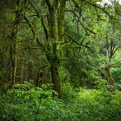 Rund um den Bilstein (janeway1973) Tags: nature natur hessen deutschland germany fog mist foggy dunstig neblig nebel diesig wald forest bäume trees green grün