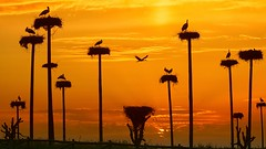 237e23e796e93350ec96480d7dff7123bd7d17f60f2108df8422c9973cbaeb14 (Qasi P) Tags: sea lion trees land sky landscape