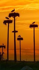 d95c12c5f4afd1e1bddef1b00bb14f9b3f8272d5a58a347e3dca8ec45dc04626 (Qasi P) Tags: sea lion trees land sky landscape