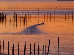 paisaje (pacoocolo) Tags: cormoran albufera