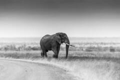 Satara plains (Sheldrickfalls) Tags: elephant elephantbull satara sataracamp plains olifant krugernationalpark kruger krugerpark southafrica