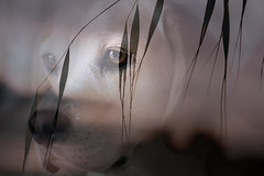 TWO-IN-ONE (Sue Armsby) Tags: sadie dog pet doubleexposure grass light smileonsaturday twoinone intriguing armsbysue
