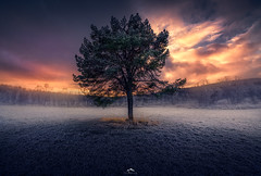 Tree of the life (Mo.Sharaf) Tags: hiking nikon walk sunset norway senja