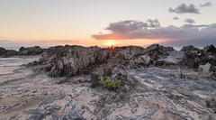 good night, sweet prince (Austin Westervelt) Tags: hawaii maui sunset light sunlight rocks rocky island beautiful seascape landscape sky clouds color colorful golden outdoors outside nature