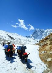Yak Train to EBC, Nepal (ipig99) Tags: everest nepal ebc base camp mountain yak