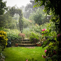 Cats and Dogs!!! (judy dean) Tags: 365the2019edition 3652019 day158365 07jun19 judydean 2019 garden rainstorm catsanddogs stairrods 52in2019 25clean