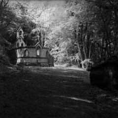 In the woods (4foot2) Tags: wood school trees abandoned film woods ruins westsussex analogue derelict bedhamchurch bednam blackandwhite bw monochrome zeiss mediumformat mono jena 120film carl 28 rodinal kiev ilford f28 80mm hp5plus ilfordhp5plus 2019 filmphotography 88cm kiev88cm carlzeissjena biometar biometar80mm28 hasselbladski standdevelop ukrainiancamera carlzeissjenabiometar80mm28 4foot2 4foot2flickr 4foot2photostream fourfoottwo киев88cm