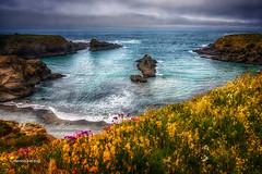 Mendocino Headlands (Dennis Herzog) Tags: california beaches travel weather fog flora waves seascapes pacificocean oceans mendicino westcoast seastacks mendicinoheadlands northerncalifornia wildflowers