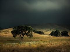 Far Behind (keesvandongen) Tags: hills landscape sunlight storm dramaticsky light trees