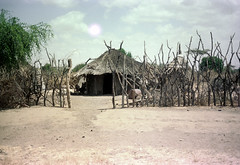 78-354 (ndpa / s. lundeen, archivist) Tags: nick dewolf color photograph photographbynickdewolf 1976 1970s film 35mm 78 reel78 africa northernafrica northeastafrica african ethiopia ethiopian village unidentified unidentifiedvillage sky clouds fence branches sticks wood trees building buildings hut huts thatchroof thatchedroof