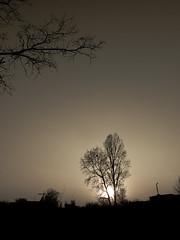 dream (Darek Drapala) Tags: dream evening sun sky silhouette sunset skyskape trees tree lumix light nature space