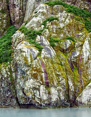 Like a Rock (brucecarlson66) Tags: color green nature rock landscape grey purple gray world park travel cruise holland reflection tree heritage water alaska america bay site moss bush chaos inner glacier national stunning lichen passage preserve organized