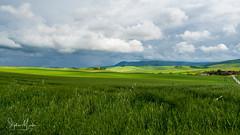 A proximité de San quirico d'orcia (stephan.martos) Tags: sonyfe1635 a7 italie toscane valdorcia montalcino sanquiricodorcia paysage