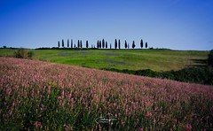 Colors in Val d'Orcia (Andrea Rizzi photo) Tags: landscape landscapephotography nature naturephotography rural ruralphotography colors cpòours spring tuscany toscana italia flowers tree canon canonphotographers canonphotography flickrnature agricolture green paesaggio valdorcia travel travelphotography light photography