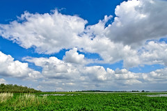 This Land is my Land (Hindrik S) Tags: landscape landschap landschaft lânskip panorama scenery scenic lauwersmeer lauwersmar lauwerszee lauwerssee clouds cloud cloudy blue bluesky loft luft sky land weather fryslân friesland netherlands nederland water wolken summer simmer zomer sommer sonyphotographing sony sonyalpha sony1650mmf28dtssm amount on1 2019 scenicsnotjustlandscapes on1pics on1photoraw2019