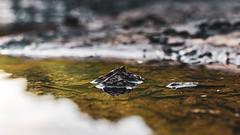 Tiny Landscape 18. Big Maumelle River. (issafly) Tags: nikon nature water naturalstate arkansasoutdoors wanderfar tinylandscape arkansas creek outside river nikond500 d500 explorearkansas bigmaumelle landscape littlerock 2019 mountain nikkor35mm