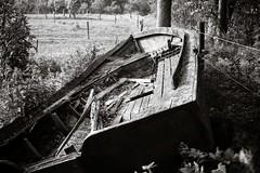 Deacaying boat (Geir Bakken) Tags: blackandwhite film filmisnotdead filmphotography filmcamera 35mmfilm ilovefilm analog analogue analogphotography boat decayed bw rolleirpx rolleirpx25