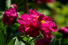 _DSC1670 (Ghostwriter D.) Tags: burghausen castle bavaria town nikond600 flowers garden