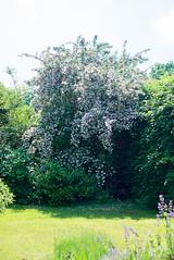 _DSC1655 (Ghostwriter D.) Tags: burghausen castle bavaria town nikond600 flowers garden