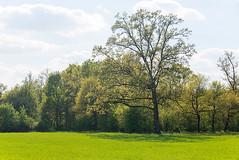 _DSC1116 (Ghostwriter D.) Tags: tree castle bavaria town burghausen nikond600
