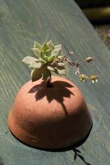 Roc ceramic with graptoveria