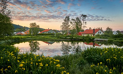 """""""In the morning"""" (Vest der ute) Tags: g7xm2 g7xll norway rogaland haugesund water landscape pond grass flowers houses earlymorning sky clouds foliage trees reflections mirror fav200 fav25"""