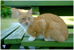 The Visitor - Kitty Kitty XT7063e (Harris Hui (in search of light)) Tags: harrishui fujixt1 digitalmirrorlesscamera fuji fujifilm vancouver richmond bc canada vancouverdslrshooter mirrorless fujixambassador xt1 fujixcamera fujixseries fujix fujixf35mmf2 fujiprimelens fixedlens standardlens cat visitor backyard catfriend kittykitty pet catportrait
