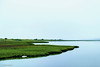 Peaceful Morning on Pocha Pond (John Piekos) Tags: shoreline tranquil marthasvineyard calm peaceful water pochapond edgartown shore pond trusteesofthereservation fishing osprey mist nest green fog xt3 saltpond chappaquiddick