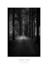 Forest Lane (Rense Haveman) Tags: rmctokina17mmf35 rensehaveman manualfocus bw blackwhite monochrome monochromelandscape landscape forest trees light lightroom