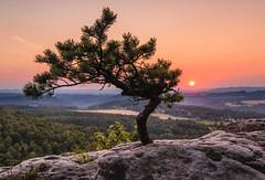 Little pine on Papststein, Saxony (Uwe Kögler) Tags: saxony sachsen sächsischeschweiz sunset sonnenuntergang kiefer landschaft landscape lilienstein pine abend abendrot sommer sonne evening