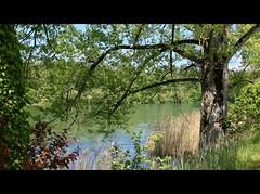 ViaRhenana 22 (Beat09) Tags: schweiz switzerland suisse rhein rhine rheinufer viarhenana natur nature