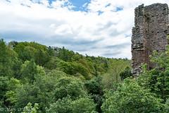 RosslynCastle Glen LO-0070 (Mary D'Elia) Tags: roslin roslinglen rosslyncastle scotland uk ancientwoodland bridge forrest history travel trees