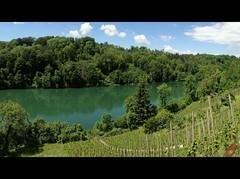 ViaRhenana 23 (Beat09) Tags: schweiz switzerland suisse rhein rhine rheinufer viarhenana rebberge weinberge