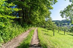 Mückenloch June Path 2019 II (boettcher.photography) Tags: juni june 2019 badenwürttemberg rheinneckarkreis germany deutschland sashahasha boettcherphotos boettcherphotography kurpfalz mückenloch neckargemünd landschaft landscape