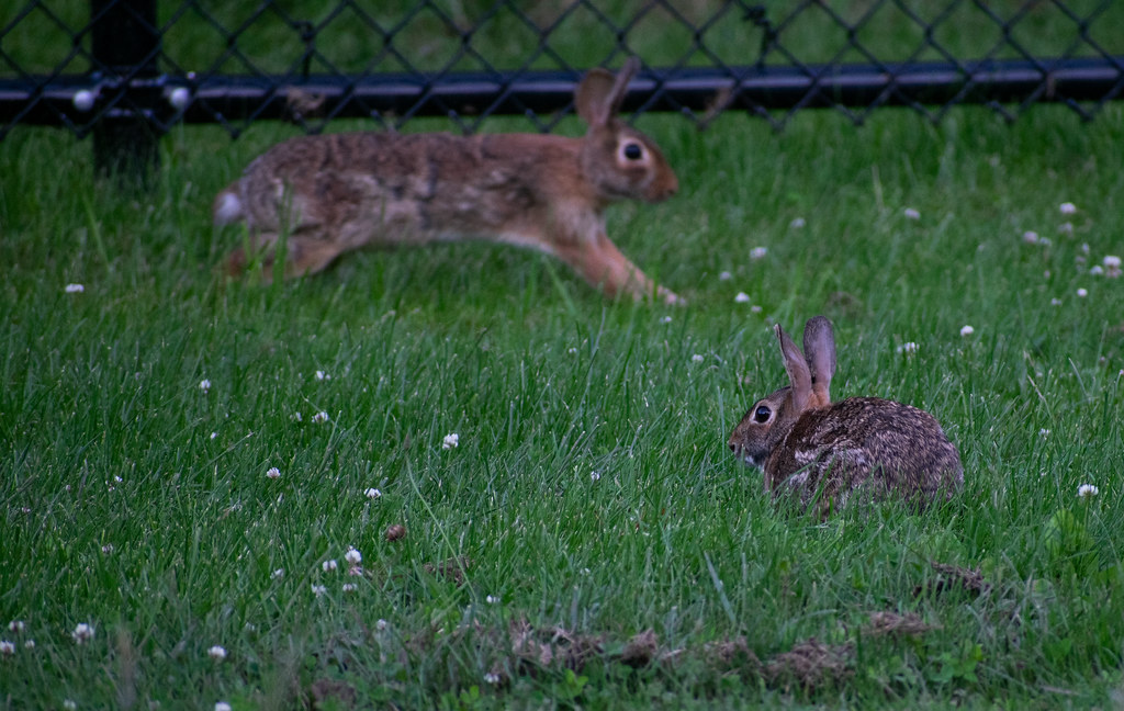 The World's Best Photos of bunny and clover - Flickr Hive Mind