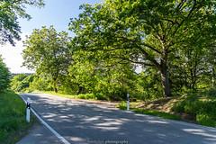 June Road to Mückenloch 2019 (boettcher.photography) Tags: juni june 2019 badenwürttemberg rheinneckarkreis germany deutschland sashahasha boettcherphotos boettcherphotography kurpfalz mückenloch neckargemünd road strase