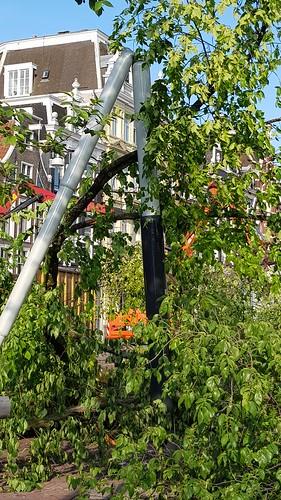 Omgevallen boom, lantaarnpaal geknakt