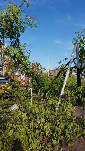 Omgevallen bomen Amstel