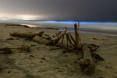 Bioluminescent Red Tide in San Diego, California (slworking2) Tags: delmar california unitedstatesofamerica red tide bioluminescent bioluminescence sandiego ocean torreypinesstatebeach torrey pines beach blue glow waves