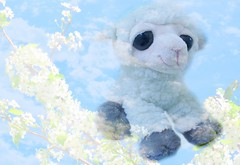 """""""Lambs are clouds with legs."""" (Bennilover) Tags: lambs lamb liam animals stuffies stuffedanimals softtoys smileonsaturday flowers blossoms clouds blue twoinone springtime june googlepixel3a"""