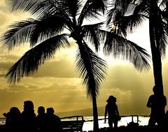 Waikiki sunlight (thomasgorman1) Tags: palmtree trees people nikon pose sun sunlight island sky waikiki honolulu candid streetshots woman streetphotos beach travel public