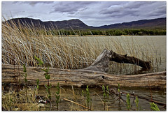 On The Banks (2bmolar ~ Off for awhile!) Tags: hcs cliche clichesaturday landscape pahranagatnationalwildliferefuge