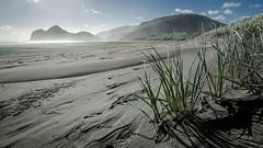 Bethells Beach Dunes (Stefan Marks) Tags: bethellsbeach tasmansea beach cloud dune grass nature ocean outdoor sand sky aucklandwaitakere northisland newzealand
