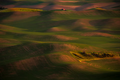 Evening Light (NW Vagabond) Tags: palouse steptoebutte rolling hills evening light golden hour farmland red barn 2019 washington state
