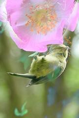 Two-in-one (tanith.watkins) Tags: florafauna twoinone smileonsaturday